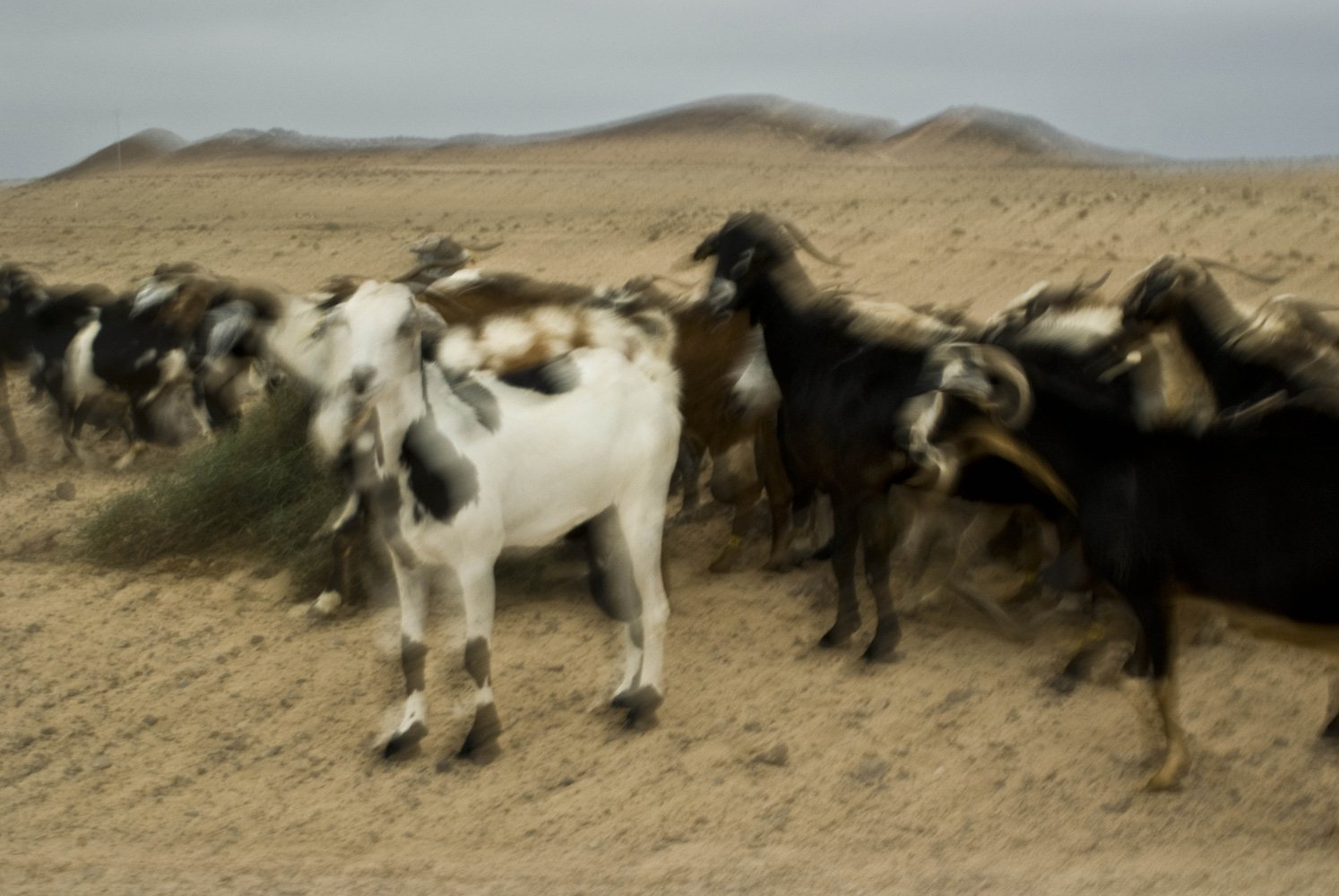 goats with volcanoes 5