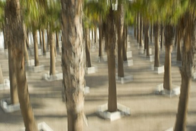 PALMS IN SQUARES II