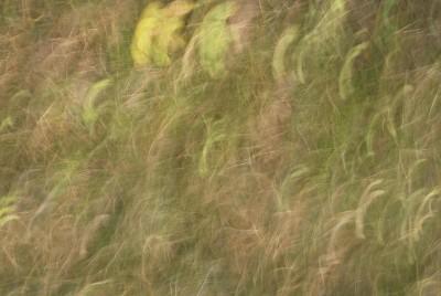 POLISH FOREST, GRASS a