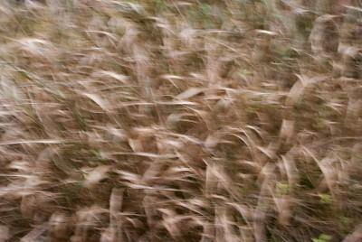 POLISH FOREST, GRASS b