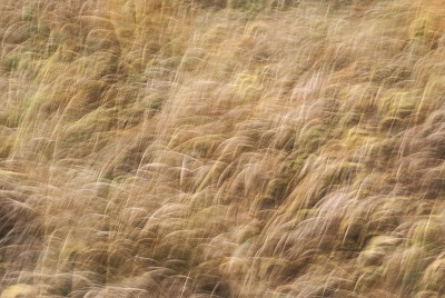 POLISH FOREST, GRASS d