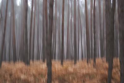 POLISH FOREST I