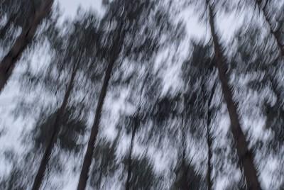 POLISH FOREST II