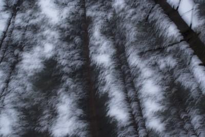 POLISH FOREST IIIB