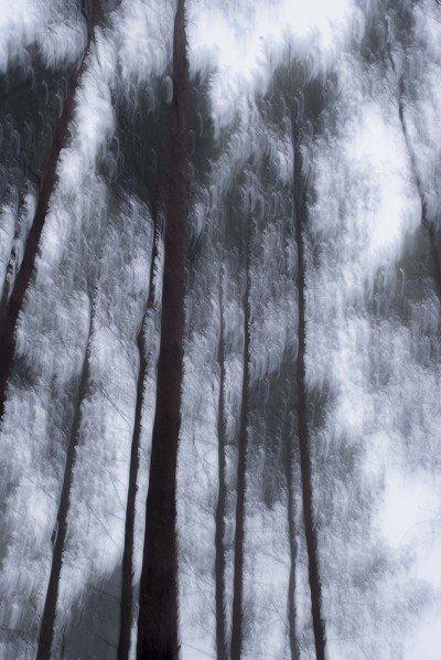 POLISH FOREST IIIC