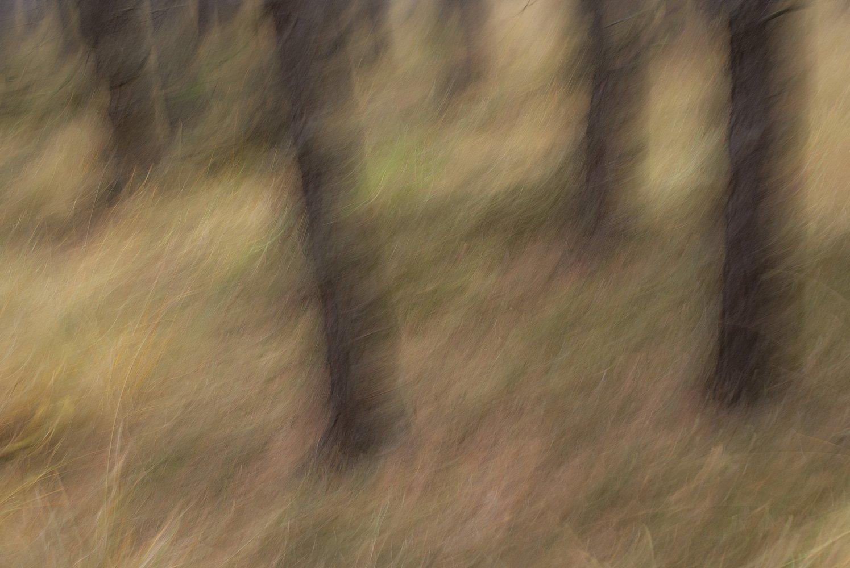 polish forest IV