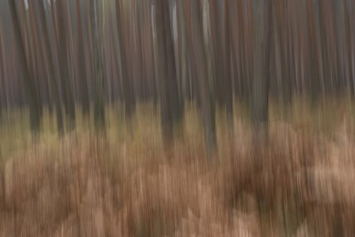 POLISH FOREST IX