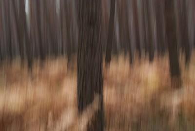 POLISH FOREST X