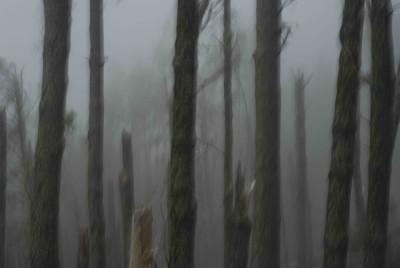 TENERIFE, TREES